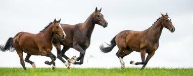 Schüssler Salze Pferde